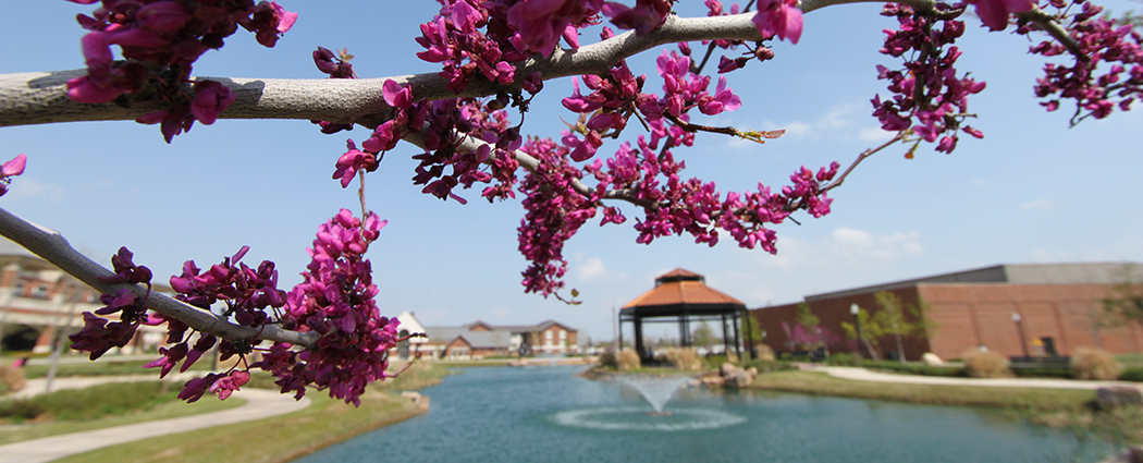 Redbud Tree near Bently Gardens