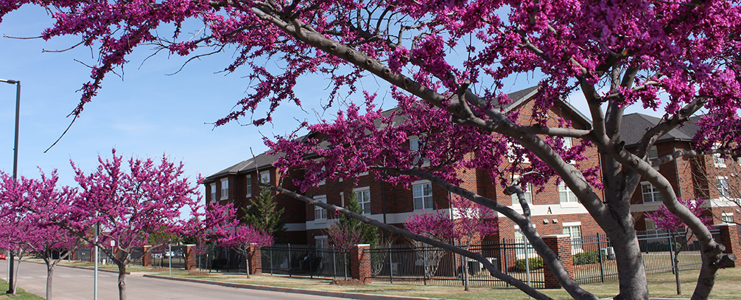 Redbud Trees near Cameron Village